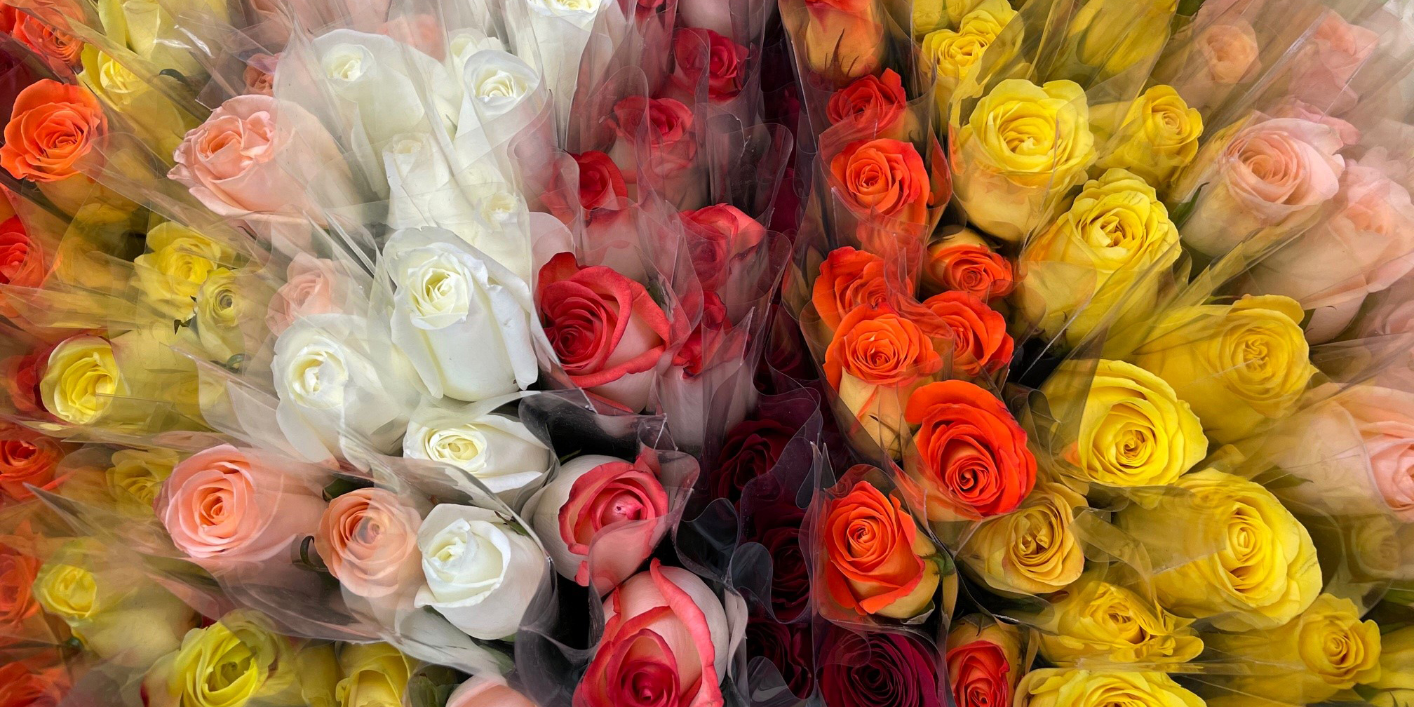 Nursing Home Flowers_1200x600.jpg